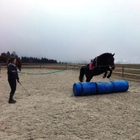 Horse-man-ship Frühlingstage