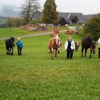 Horse-man-ship Tage Sept.