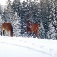 Glückliche Pferde & Wintertraining