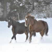 Winter Highlights vom Steinerhof